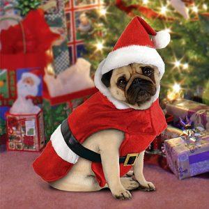 disfraces-para-perros-navidad-santa