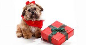 regalar-un-perro-en-navidad-ideas-originales